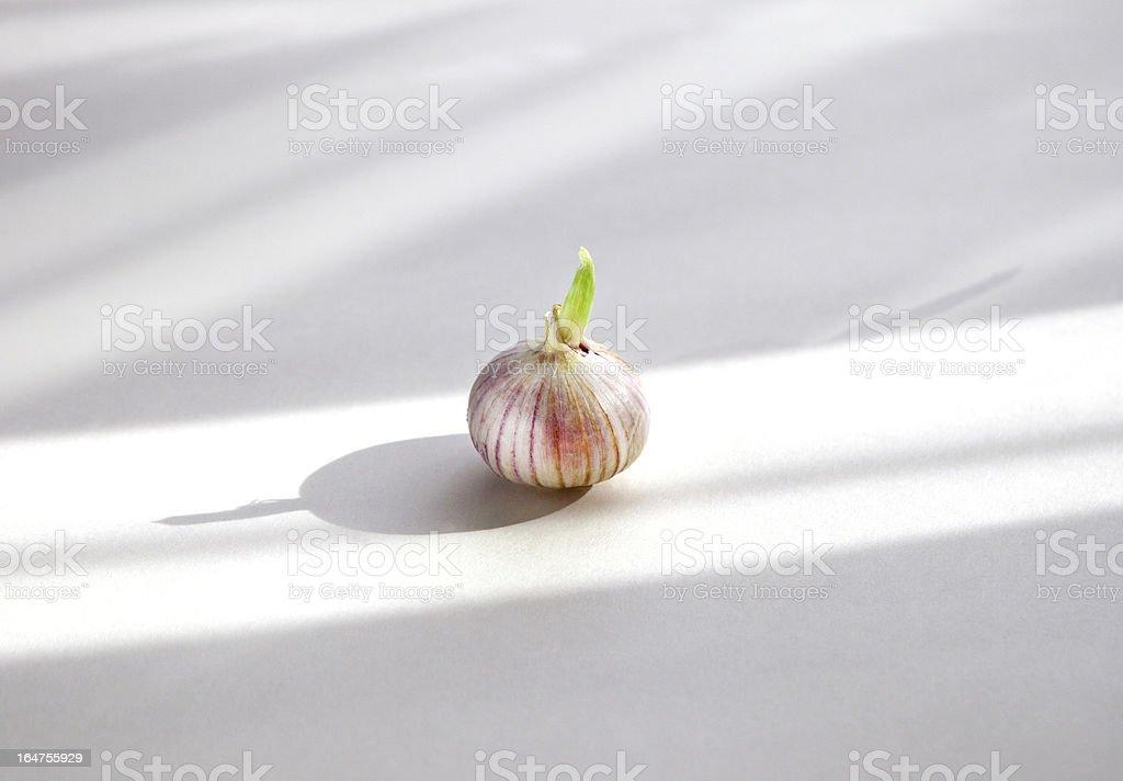 Solo Garlic royalty-free stock photo