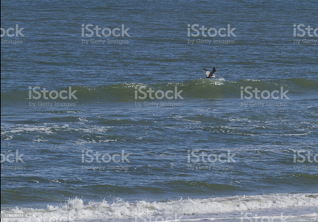 Solo Pelican Over the Sea royalty-free stock photo