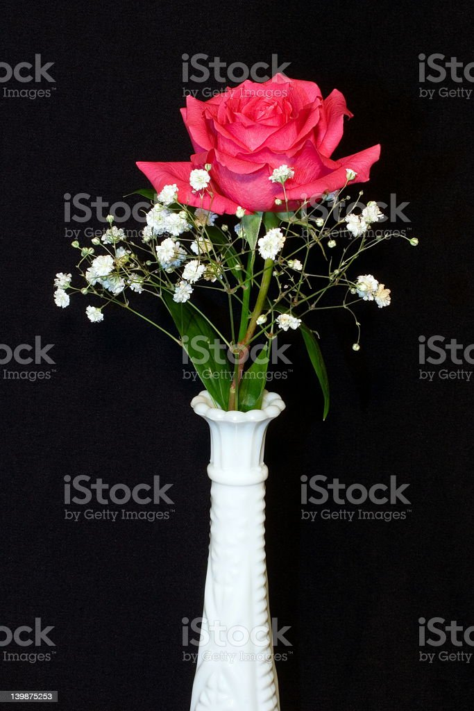 Solo Pink Rose royalty-free stock photo
