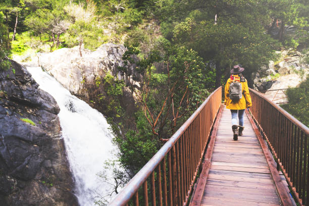 Solo traveler hiking in the forest, walking over bridge stock photo