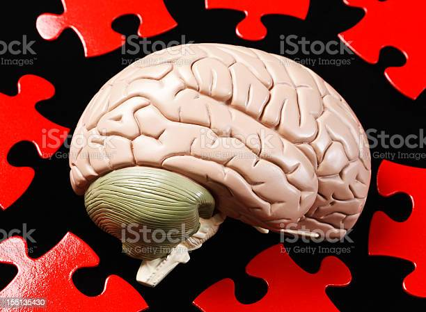 Solving the puzzle of human intelligence brain model and jigsaw picture id155135430?b=1&k=6&m=155135430&s=612x612&h=w7fbyxb 4rqbxuv4zl84gn0z3hvukedmvtak ttmfos=