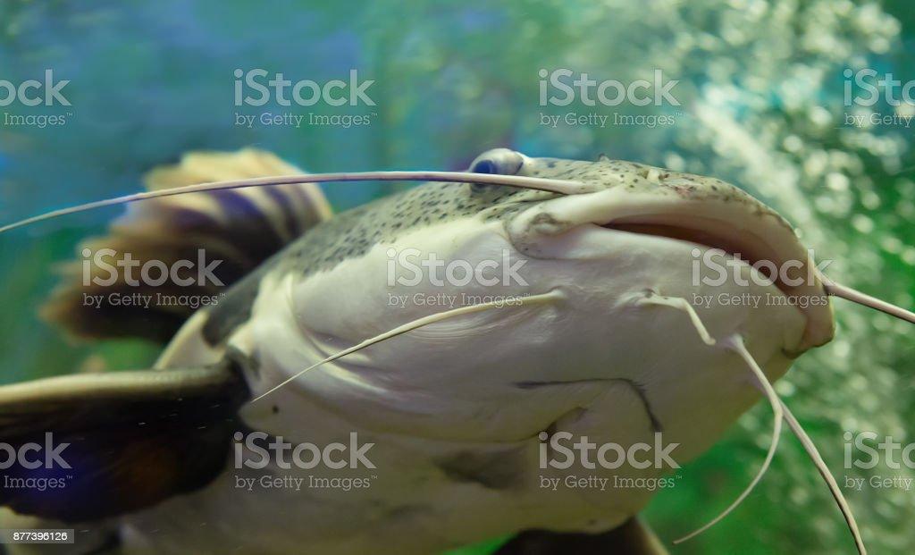 Em água perto de som - foto de acervo