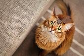 ソマリア猫見上げる