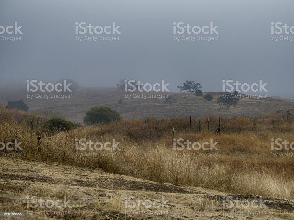 Somber Landscape on Rainy Foggy Morning stock photo