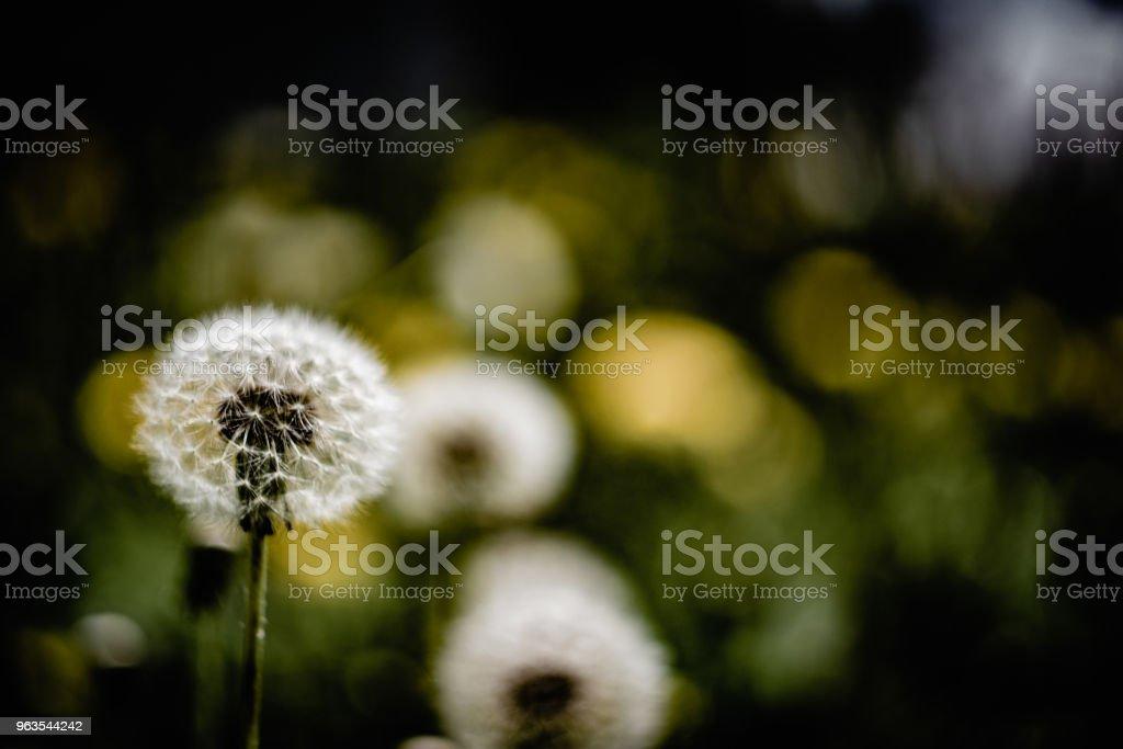 Fleur sombre - Photo