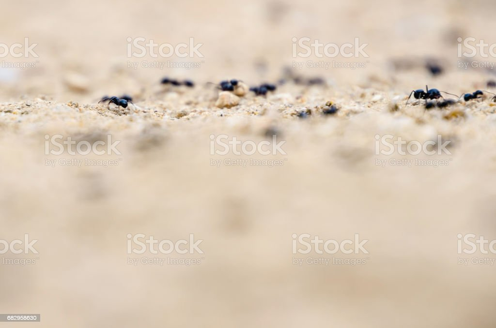 Some ants in the ground royalty-free stock photo