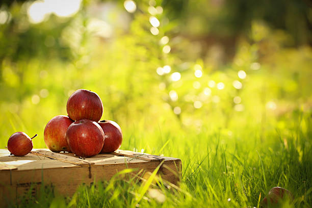 some apples with free space for text - sms umsonst stock-fotos und bilder