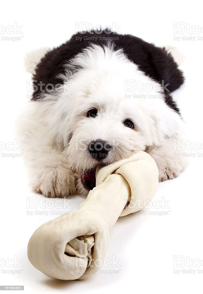 Some bones are too big to chew stock photo