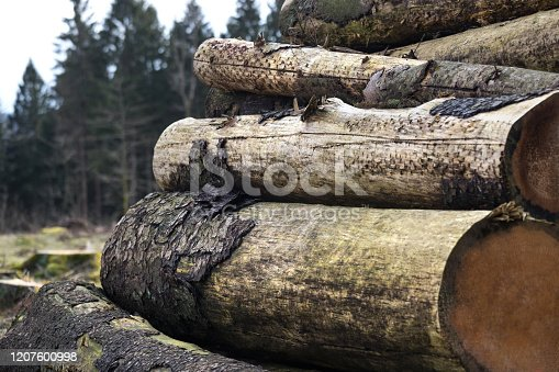 some cut trees with harvester marks in a forest