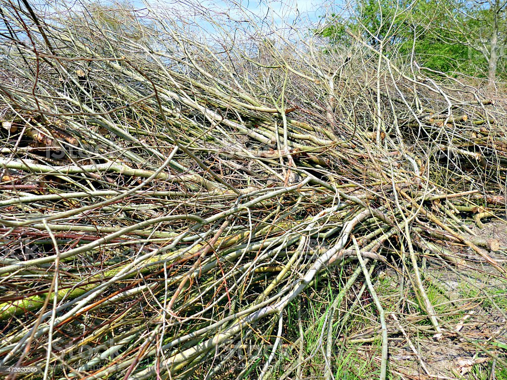 Some dry, cut off branches, arranged in a messy pile stock photo