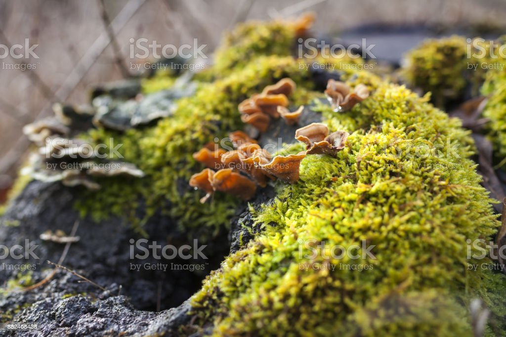 Some fragile moss on a big trunk with narrow depth of field stock photo