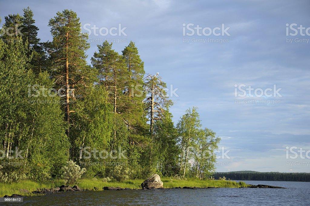 Some gulls on dead pine tree near lake royalty-free stock photo