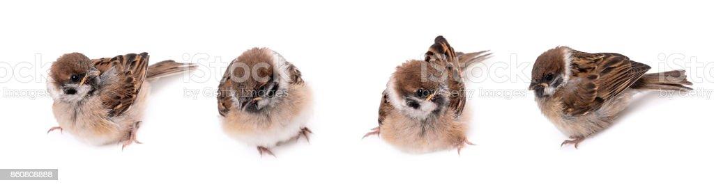 Some homework sparrow stock photo