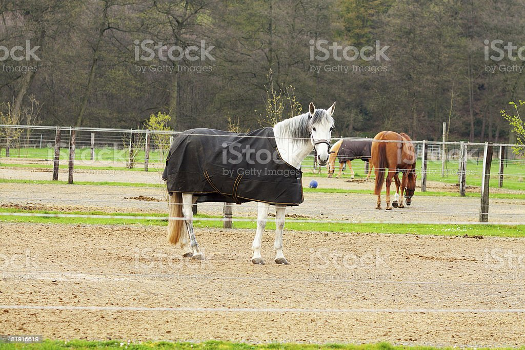 Some horses in riding stable royalty-free stock photo