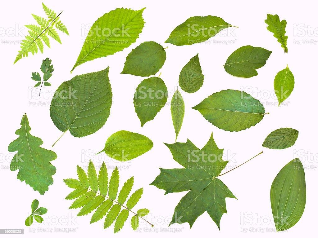 Quelques feuilles sur blanc photo libre de droits