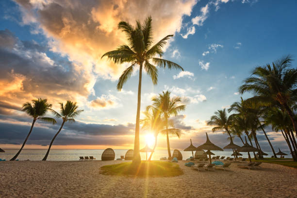 Some palm trees in front of a beautiful sundown on Mauritius stock photo
