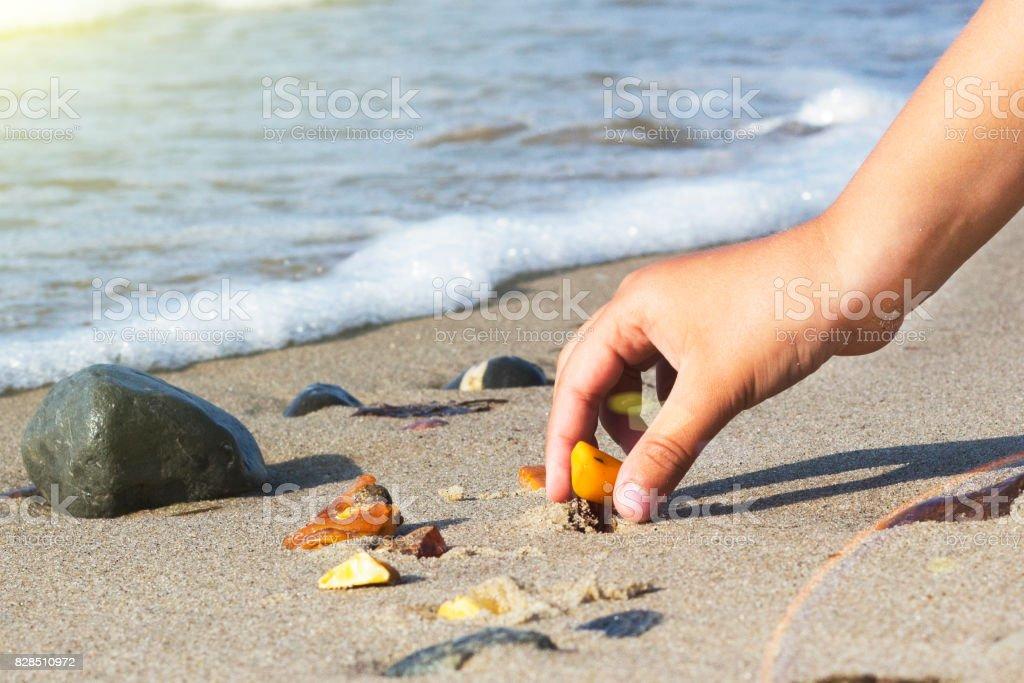 Einige Stücke des Bernsteins an der baltischen Küste gefunden – Foto