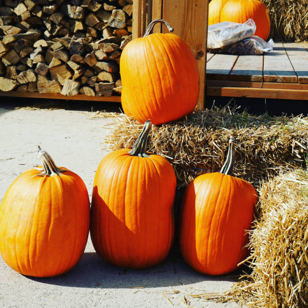 Some pumpkins on haystacks. stock photo