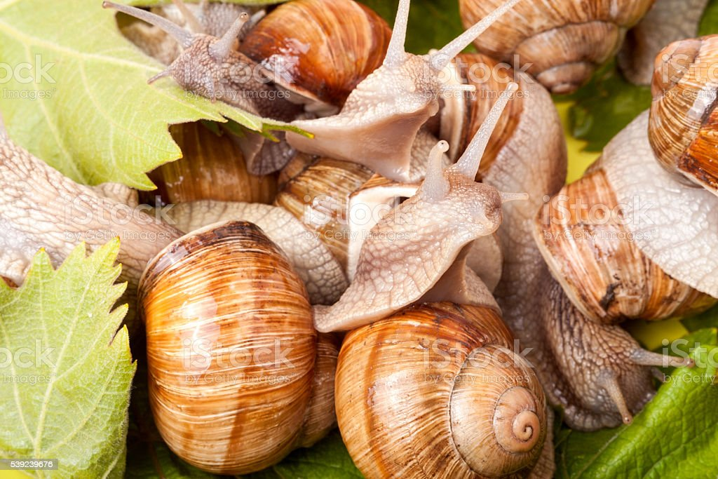 some snails crawling on a white background closeup royalty-free stock photo
