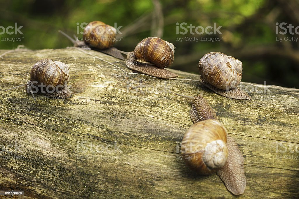 some snails on tree stem in forest royalty-free stock photo
