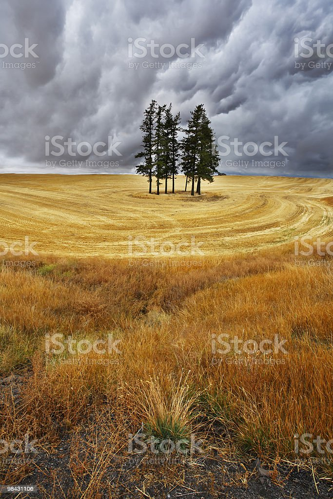 Some trees in fields royalty-free stock photo