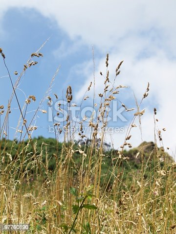 istock some yellow herbage under blue  sky 97760190