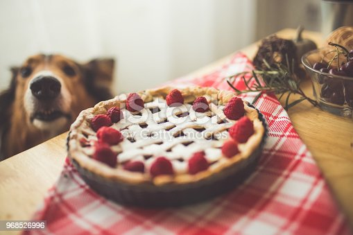 Dog sniffing Baked raspberry pie on diningroom table