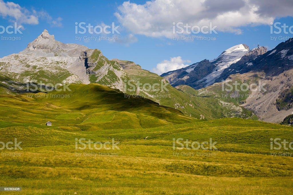 Sommerweide Auf Tannalp – Foto