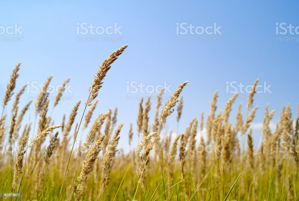 Sommerwiese royalty-free stock photo