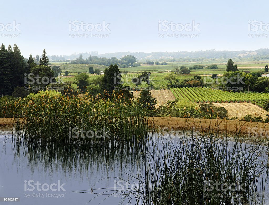 Sonoma valley - Royalty-free Agricultural Field Stock Photo