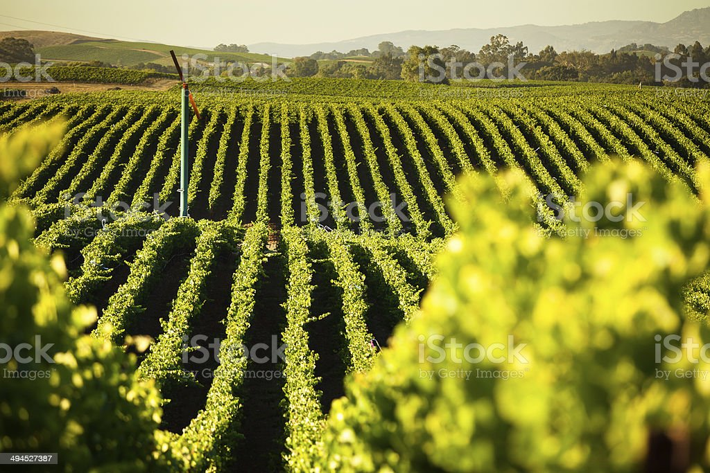 Sonoma Valley Winery stock photo
