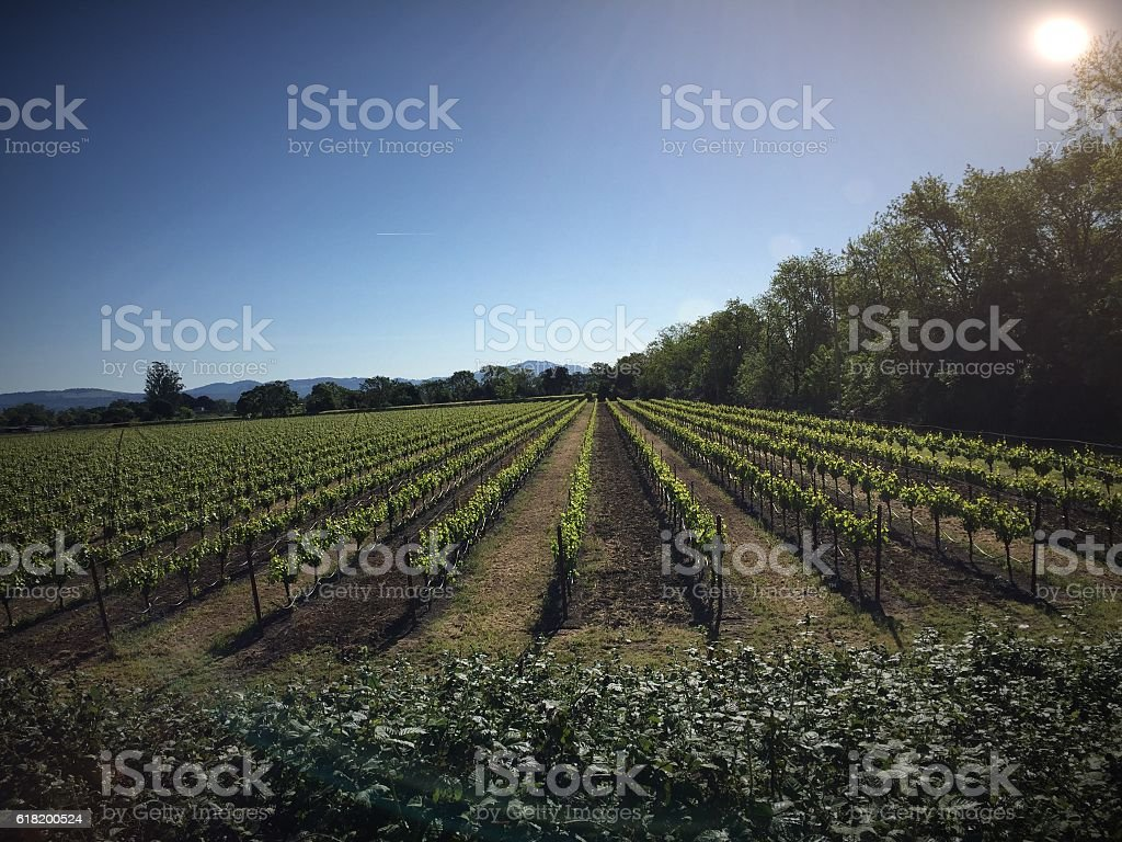 Sonoma vineyard stock photo