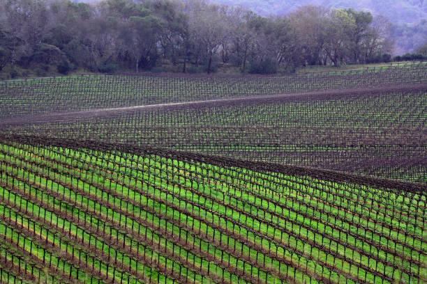 Sonoma Vineyards stock photo