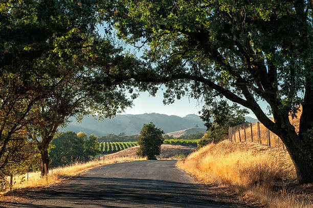 Sonoma wine country Road trip through Sonoma wine country at harvest time  sonoma stock pictures, royalty-free photos & images
