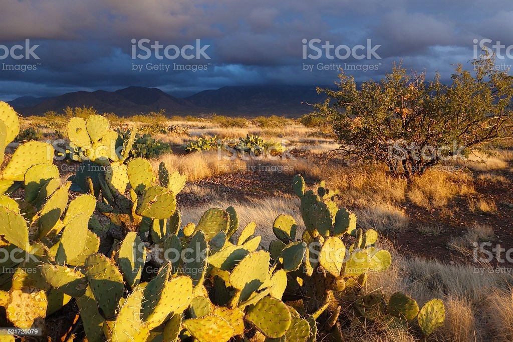 Sonoran Afternoon stock photo