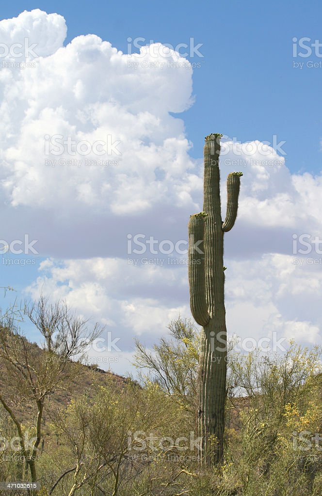 Sonoran Clouds royalty-free stock photo