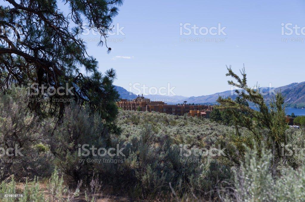 Sonoran Desert Landscape stock photo