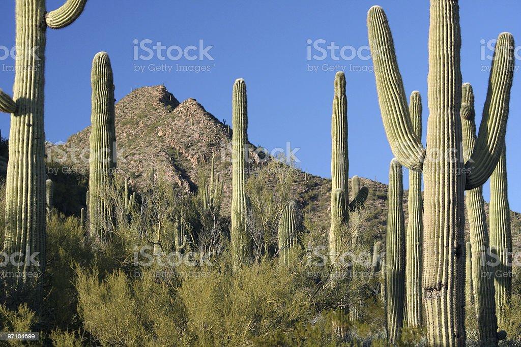 Sonoran Desert Landscape royalty-free stock photo