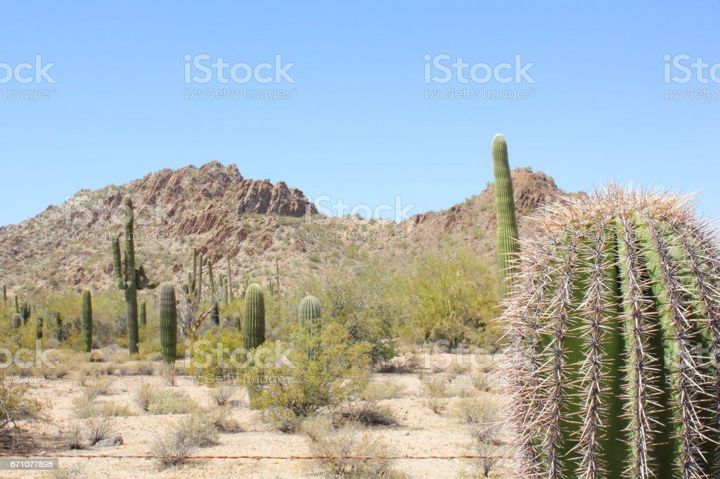 Sonoran Desert National Monument Landscape stock photo