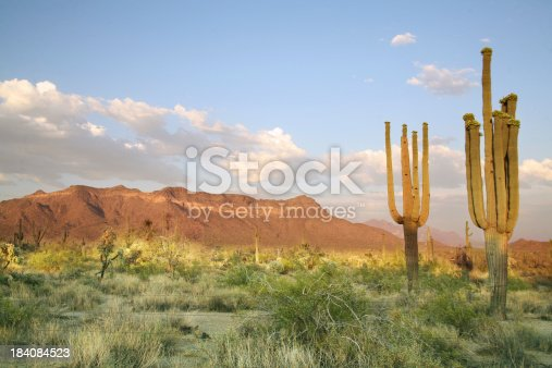 The splendor of the sonoran desert. Colors and sky are real.