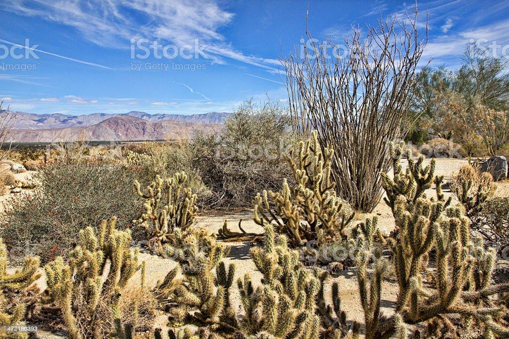 Sonoran Desert Vegetation in Anza-Borrego State Park royalty-free stock photo