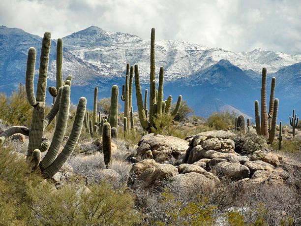 Sonoran Desert winter scene in daylight stock photo