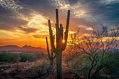 Arizona desert landscape with Saguaro Cactus silhouette and dramatic, colorful sky at sunset.
