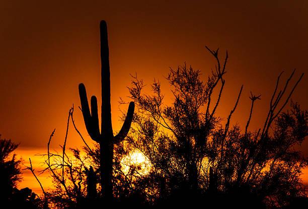 Sonoran Sunset stock photo