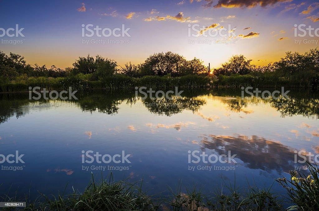 Sonran Desert Sunset Reflection royalty-free stock photo