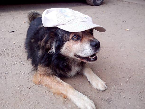 sonrisa de perro - schiebermütze stock-fotos und bilder