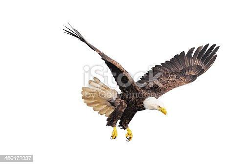 istock Bald eagle. 486472337