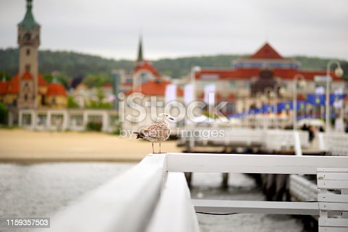 On the longest wooden pier in Europe in Poland, Sopot, a seagull sits on the fence and awaits cookies from travelers