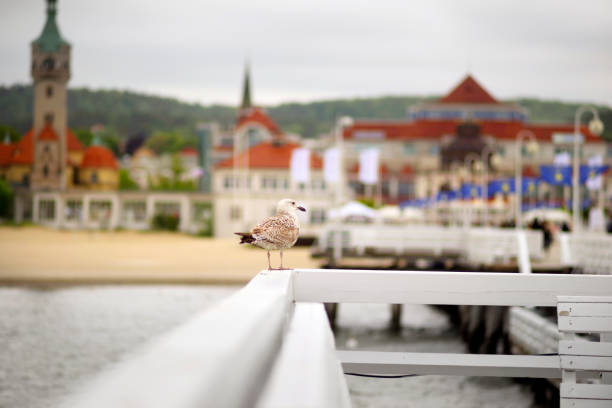Sopot Poland, on the fence of a seagull, stock photo