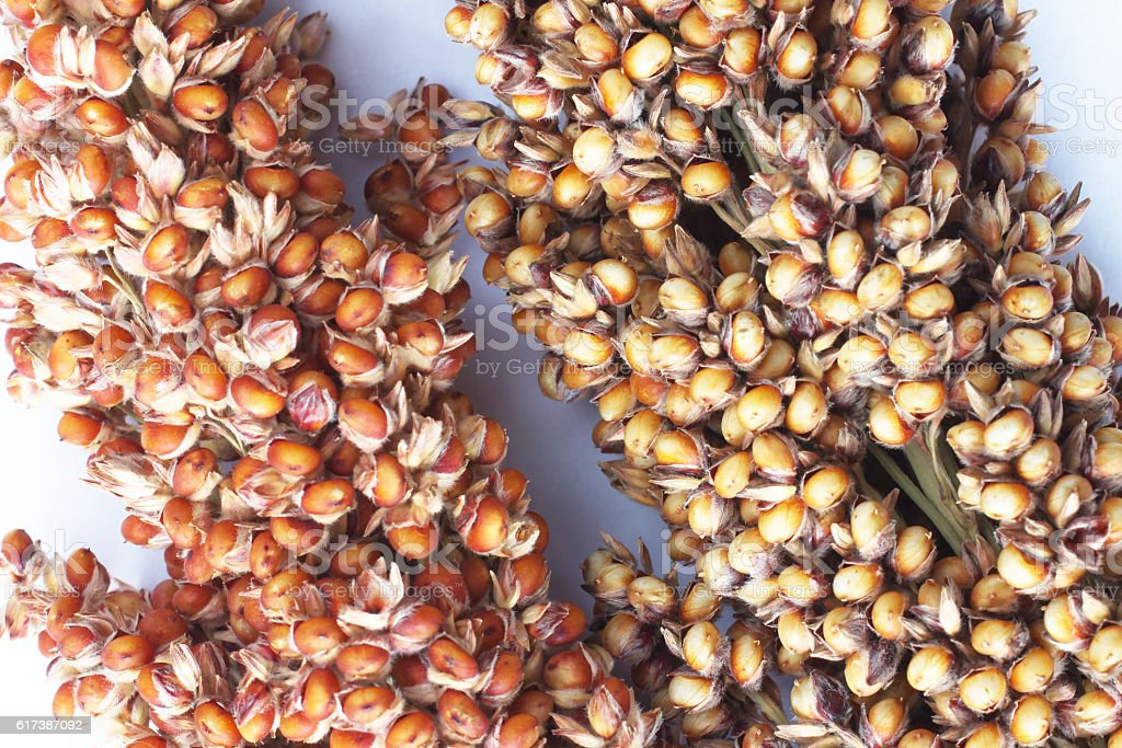Sorghum on silver-gray background. top view stock photo